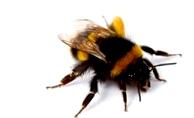 Общий весенний осмотр пчел