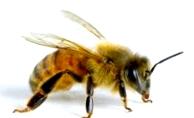 Содержание пчел в двухкорпусных ульях