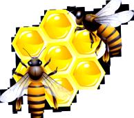 Вощина для пчел - отстройка новых сотов