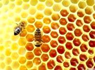 Предотвращение роения пчел