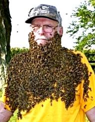 Пчелы - расширение гнезда