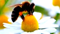 Подготовка пчел к медосбору