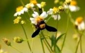 От чего зависит масса пчелы
