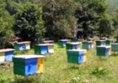 Как проявляется белковое голодание пчел?