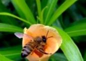 Чем отличается тип дыхания у зимующих пчел по сравнению с летними?