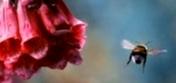 В какое время дня и при какой температуре воздуха нектароносы лучше выделяют нектар