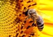Какое количество пчелосемей должно быть на точку