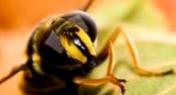 Какие особенности липы - одного из главных летних лесных нектароносов