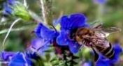 Как собрать цветочную пыльцу?
