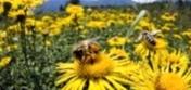 Какие меры следует принимать при обнаружении закристаллизованного меда в пчелосемье, которая зимует?