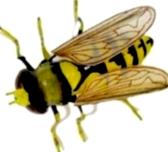 Какие срочные работы следует выполнить при беглом осмотре пчелосемей после облета?