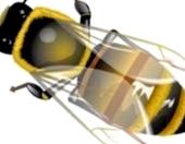 Влияет ли сила пчелосемьи на ход зимовки пчел