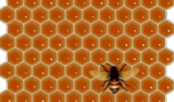 Влияет ли возраст матки на наращивание пчел на зиму?