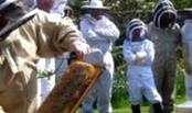 Что такое падь, почему недопустимо её содержание в зимних кормовых запасах гнезда пчел?