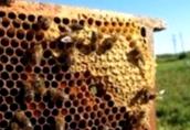 Как пчелы ориентируются в пространстве