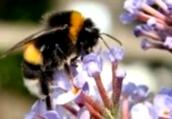 Как использовать мед при бессоннице?