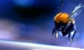 Как обеспечить переход пчел из улочки в улочку в зимний период?