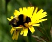 Как обеспечить вентиляцию и утепление гнезд зимующих пчел?