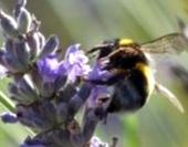 Какими должны идти пчелы в зиму?