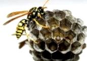 Какие характерные признаки при заболевании пчел варроатозом?
