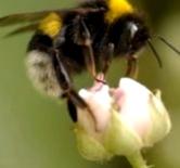 Что делать при укусе пчел?