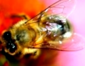 Что такое бонитировка пчелиных семей?