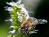 Формы аренды применяемые в пчеловодстве?