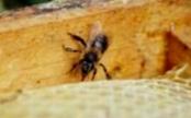 Как проконтролировать ход зимовки пчел?