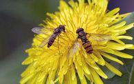 Сколько сотов оставляют в гнезде пчел, идущих в зиму?