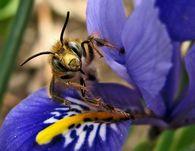 Какие продукты получают от пчел?