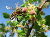 Как сушить и хранить цветочную пыльцу?