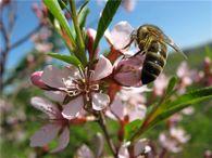 Где организовать зимовку пчел?