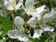 Что нужно учесть при наращивания пчел на зиму, если осень сухая?