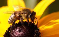 Какие преимущества зимовки пчел в зимовнике по сравнению с зимовкой на воле?