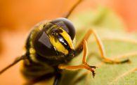 Из какого колличества пчелосемей следует начинать пчеловодство