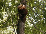 Как лечить ожоги медом?