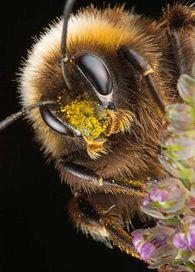 Как определяется размер арендной платы в пчеловодстве?