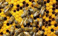 Как предотвратить роевое состояния пчелосемьи?