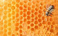 Как растопить пчеловодческий дымоход