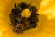 Как реагируют пчелы летом на смену погоды?