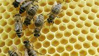 Как стимулировать сверхранний облёт пчел?
