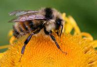 Как удалить пчел из сот?