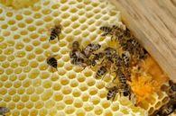 Как уменьшить количество укусов пчелами?