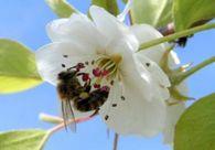 Какие виды подкормок пчел применяют пчеловоды?