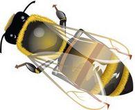 Какое количество меда и цветочной пыльцы тратит пчелосемья на выращивание 1 кг пчел?