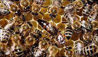 Какой учет ведут в пчеловодстве?