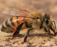 Какова потребность в палатке для осмотра пчел