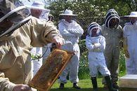 Каковы особенности содержания пчел в многокорпусных ульях в летний период?