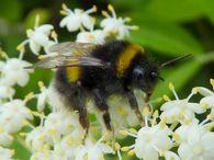 Какую погоду «предсказывают» весной насекомые?