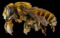 Какую зиму «предсказывают» насекомые осенью?